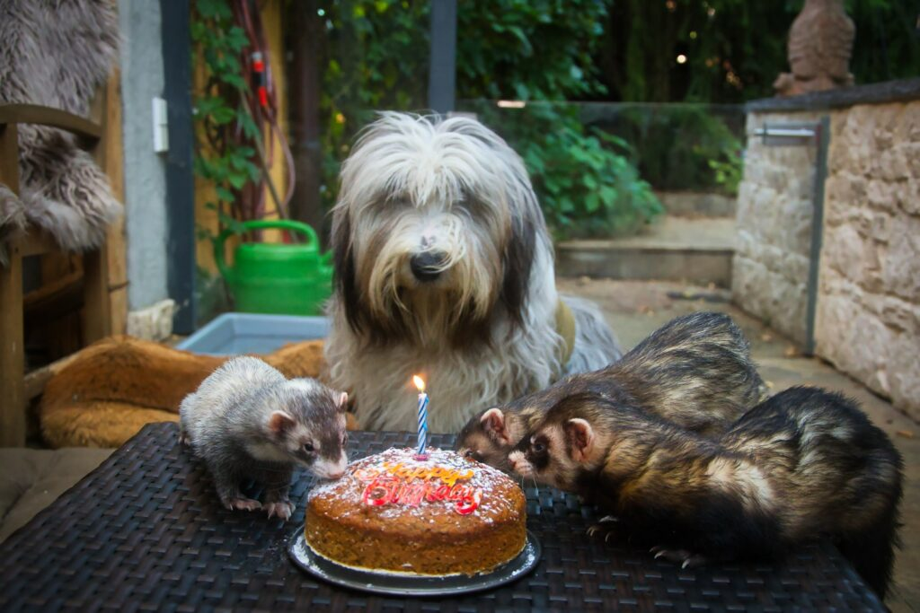 Happy first Birthday Chucho